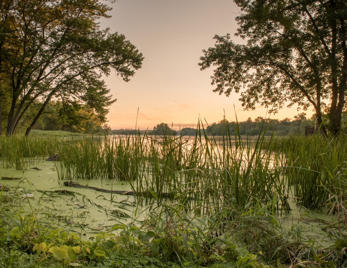 Brunner Family Forest Preserve in Carpentersville